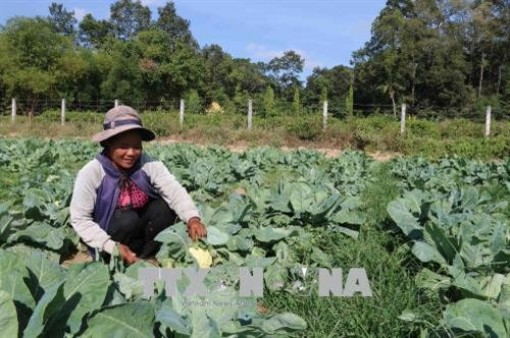 Tra Vinh farmers lend farmland for free to poor
