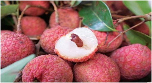 Fresh litchi to be served on Vietnam Airlines' flights